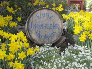 Daffodil Days at Ironstone Taken February 15, 2015
