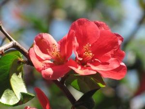 Blossoms at Oak Meadow Park April 18, 2015