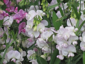 The flowers were hot pink to light pink, purple and white.